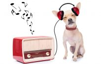 online radio music cover