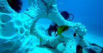 coral reef 3d print